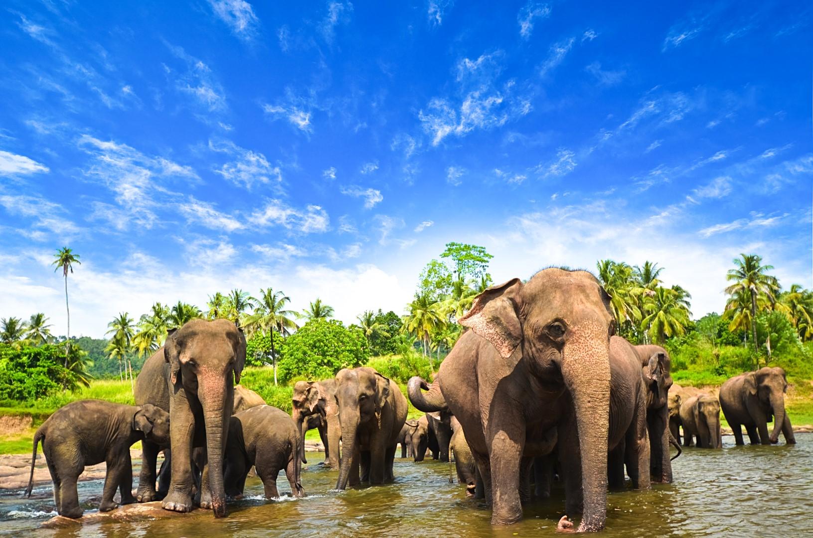 To nejlepší ze Srí Lanky s pobytem u moře
