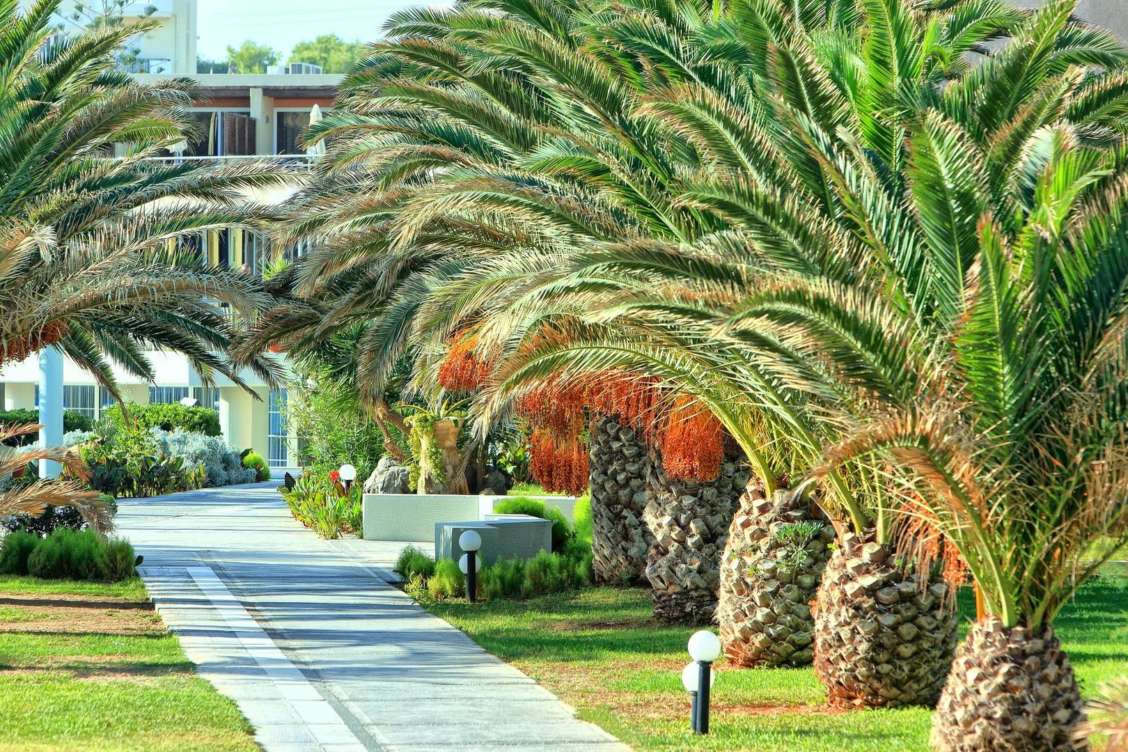 Santa Marina Beach Amoudara #3
