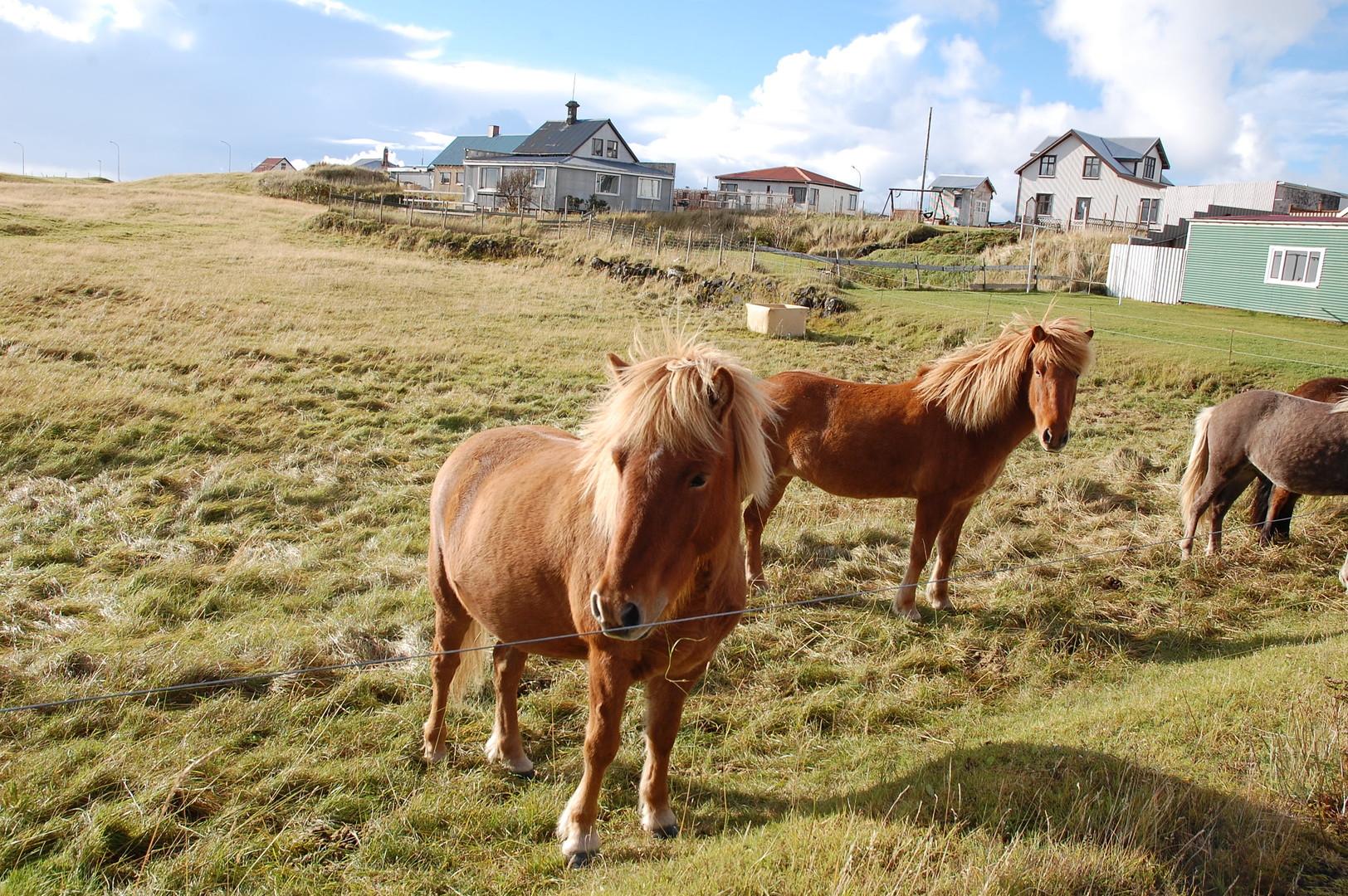 Islandská pohlednice 6 dní #3