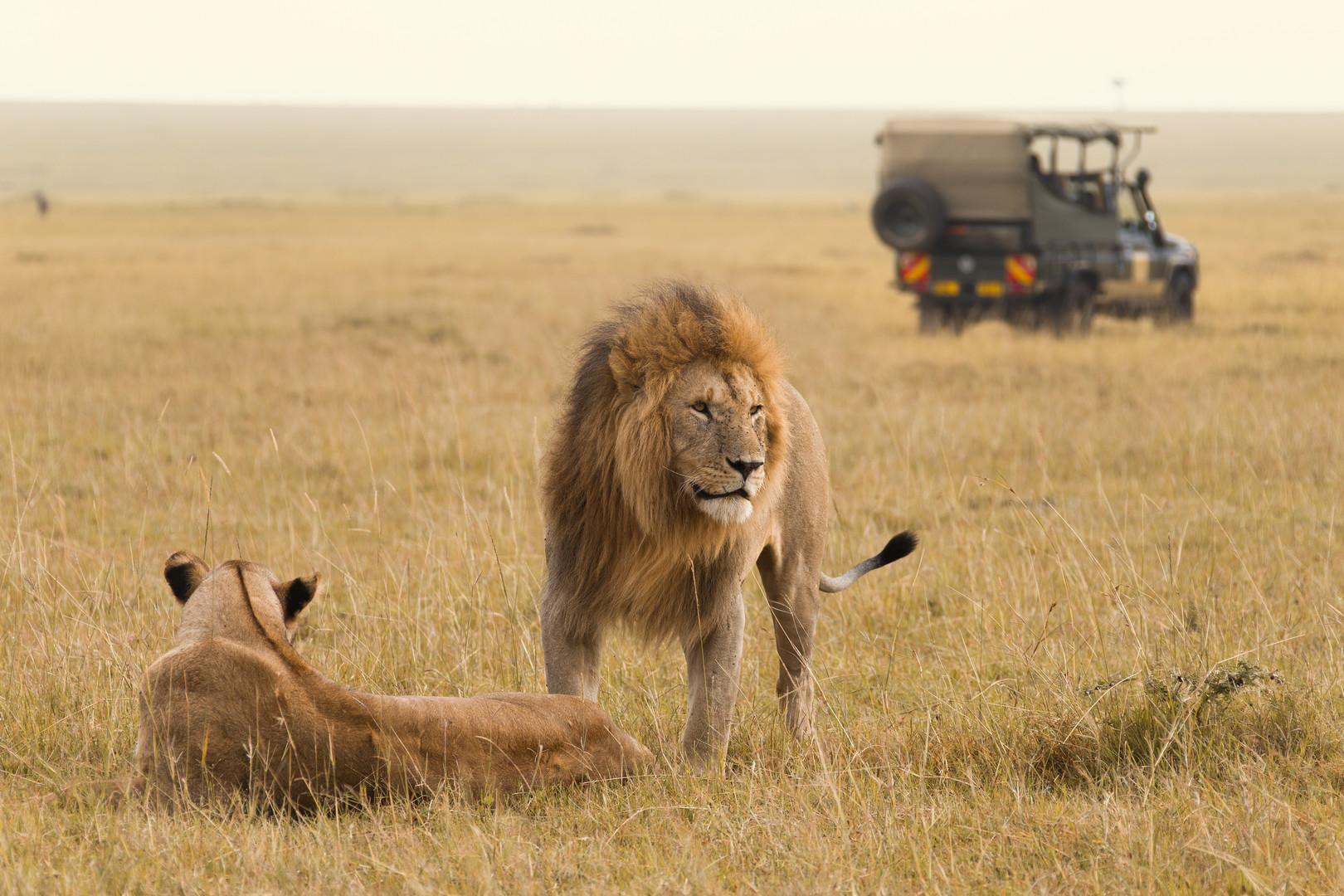 JAMBO! Národní park Tsavo, Amboseli, Nakuru, Masai Mara a pobyt u moře