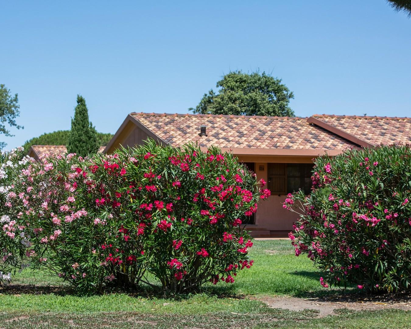 Villaggio California Camping Village #3