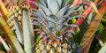 Mauricius a Reunion- hory a pláže v Indickém Oceánu #5