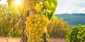 Malebné Alsasko a vinice Champagne (autobusem) #3