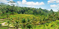 Bali na Jawie #5