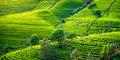 Tylko dla Ciebie – Lankijskie ogrody #6
