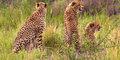 Afrykańskie cuda natury #6