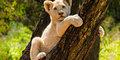 Safari z Wielką Piątką #1
