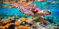 Z atolu na atol #6