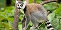 Z wizytą u lemurów #1