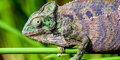 Madagaskar, wyspa pachnąca wanilią #6