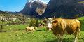 Szwajcaria w miniaturze #2