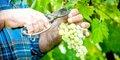 Festiwal wina, czyli z wizytą u Bachusa #6