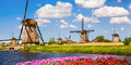 Latający Holender i słynna Parada Kwiatów! #2