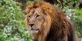 Dzika natura Afryki #1