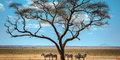 Rajskie safari #6