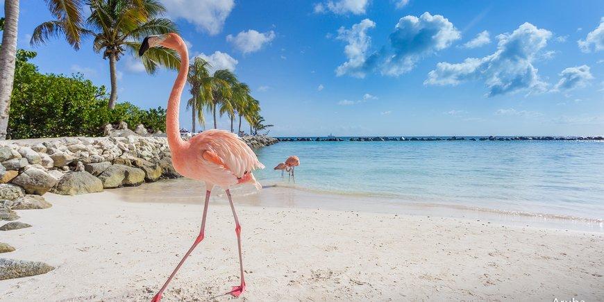 Karaibskie ABC: Aruba, Curaçao, Bonaire