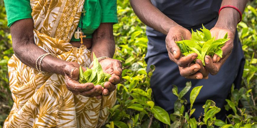Tylko dla Ciebie – Lankijskie ogrody