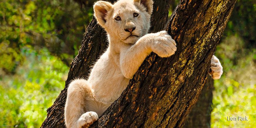 Safari z Wielką Piątką