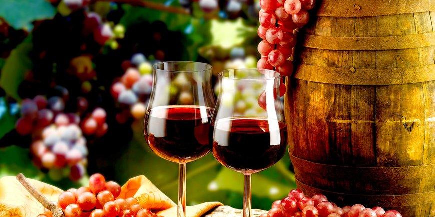 Festiwal wina, czyli z wizytą u Bachusa