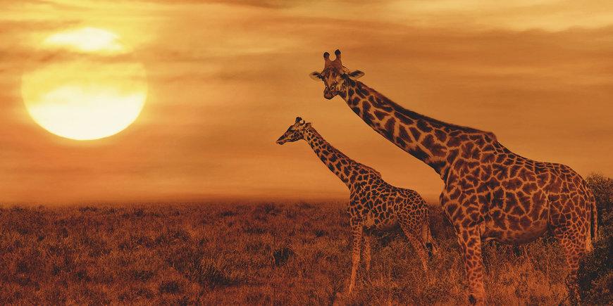 Tylko dla Ciebie – Wielka Piątka Afryki