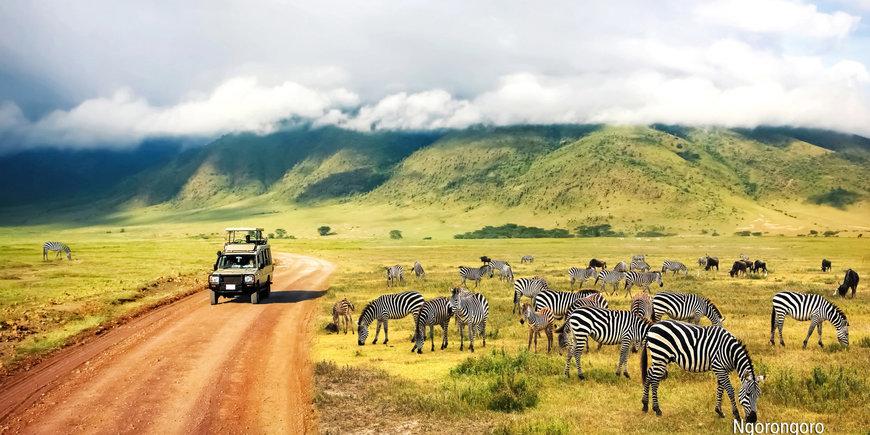 Rajskie safari