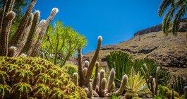 Gran Canaria #5
