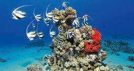 Hurghada #6