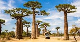 Мадагаскар #4