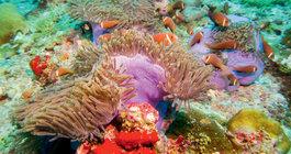 Malediwy #6