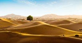 Oman #1