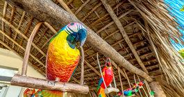 Punta Cana #3