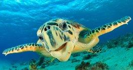 Sharm el Sheikh #4