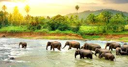 Sri Lanka #3