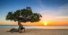 Aruba #5