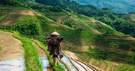 China #6