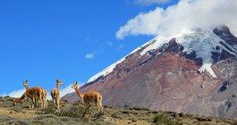 Ekwador #2