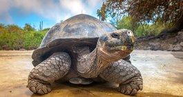 Żółwie na równiku