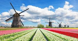 Latający Holender i słynna Parada Kwiatów!