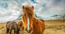 Islandia #4
