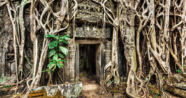Kambodża #6