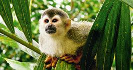 Kostaryka #6