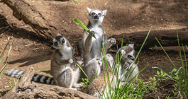 Madagaskar jak z bajki