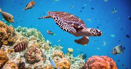 Koralowe love