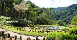 Martinique #5