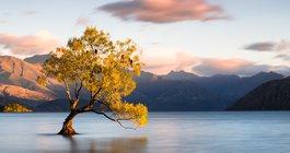 Новая Зеландия #2