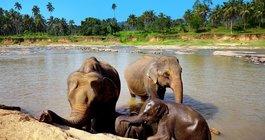 Шри-Ланка #3