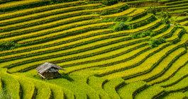 Wietnam #1