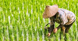 Wietnam #2