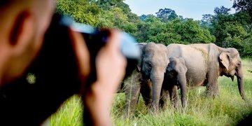 Safari na Cejlonie