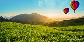Herbaciane Wzgórza Cameron